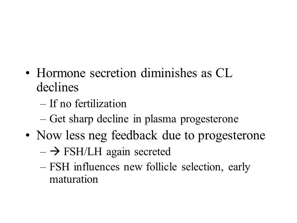 Hormone secretion diminishes as CL declines –If no fertilization –Get sharp decline in plasma progesterone Now less neg feedback due to progesterone –