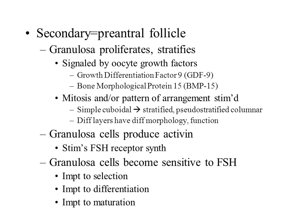 Secondary=preantral follicle –Granulosa proliferates, stratifies Signaled by oocyte growth factors –Growth Differentiation Factor 9 (GDF-9) –Bone Morphological Protein 15 (BMP-15) Mitosis and/or pattern of arrangement stim'd –Simple cuboidal  stratified, pseudostratified columnar –Diff layers have diff morphology, function –Granulosa cells produce activin Stim's FSH receptor synth –Granulosa cells become sensitive to FSH Impt to selection Impt to differentiation Impt to maturation