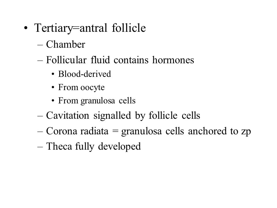Tertiary=antral follicle –Chamber –Follicular fluid contains hormones Blood-derived From oocyte From granulosa cells –Cavitation signalled by follicle
