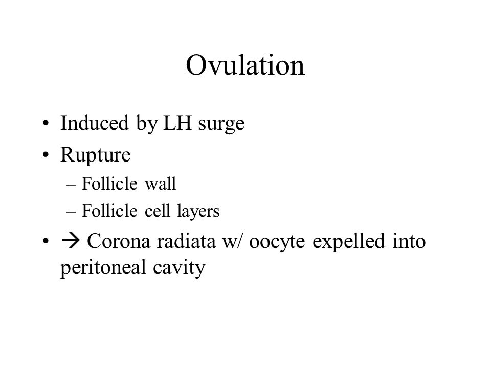 Ovulation Induced by LH surge Rupture –Follicle wall –Follicle cell layers  Corona radiata w/ oocyte expelled into peritoneal cavity