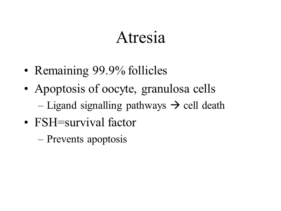 Atresia Remaining 99.9% follicles Apoptosis of oocyte, granulosa cells –Ligand signalling pathways  cell death FSH=survival factor –Prevents apoptosis