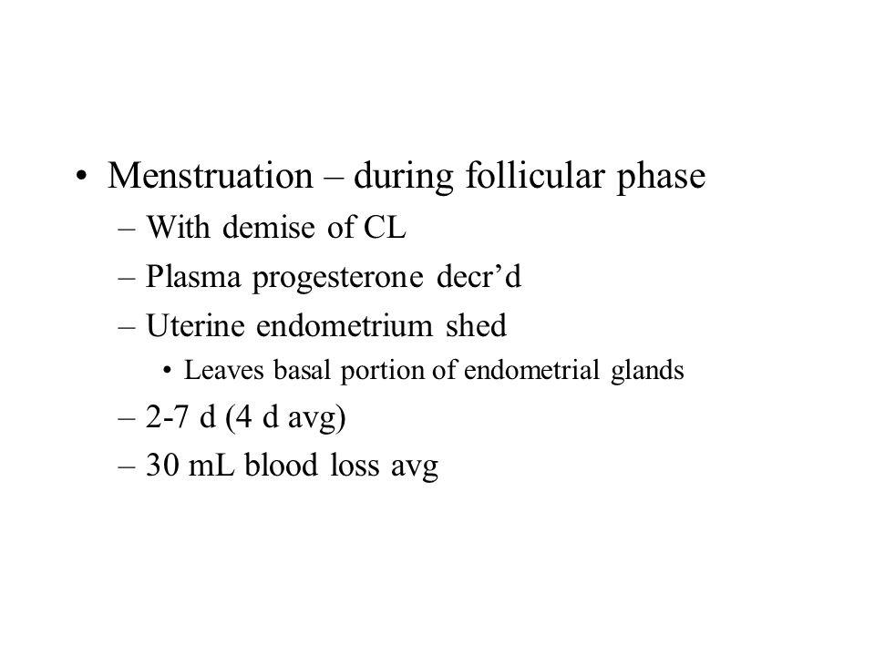 Menstruation – during follicular phase –With demise of CL –Plasma progesterone decr'd –Uterine endometrium shed Leaves basal portion of endometrial glands –2-7 d (4 d avg) –30 mL blood loss avg