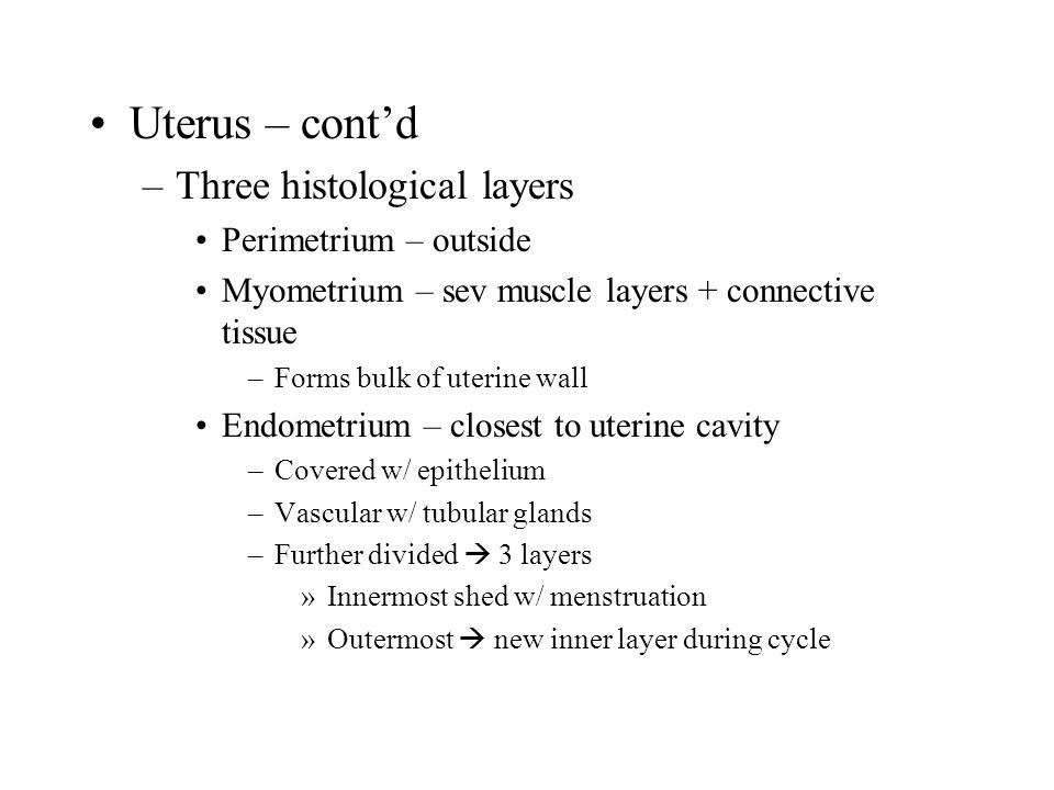 Uterus – cont'd –Three histological layers Perimetrium – outside Myometrium – sev muscle layers + connective tissue –Forms bulk of uterine wall Endometrium – closest to uterine cavity –Covered w/ epithelium –Vascular w/ tubular glands –Further divided  3 layers »Innermost shed w/ menstruation »Outermost  new inner layer during cycle