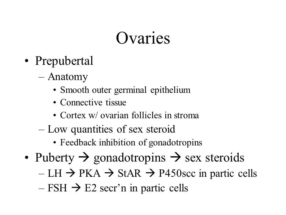 Ovaries Prepubertal –Anatomy Smooth outer germinal epithelium Connective tissue Cortex w/ ovarian follicles in stroma –Low quantities of sex steroid F