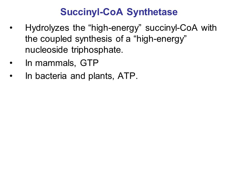 Succinyl-CoA Synthetase Hydrolyzes the high-energy succinyl-CoA with the coupled synthesis of a high-energy nucleoside triphosphate.