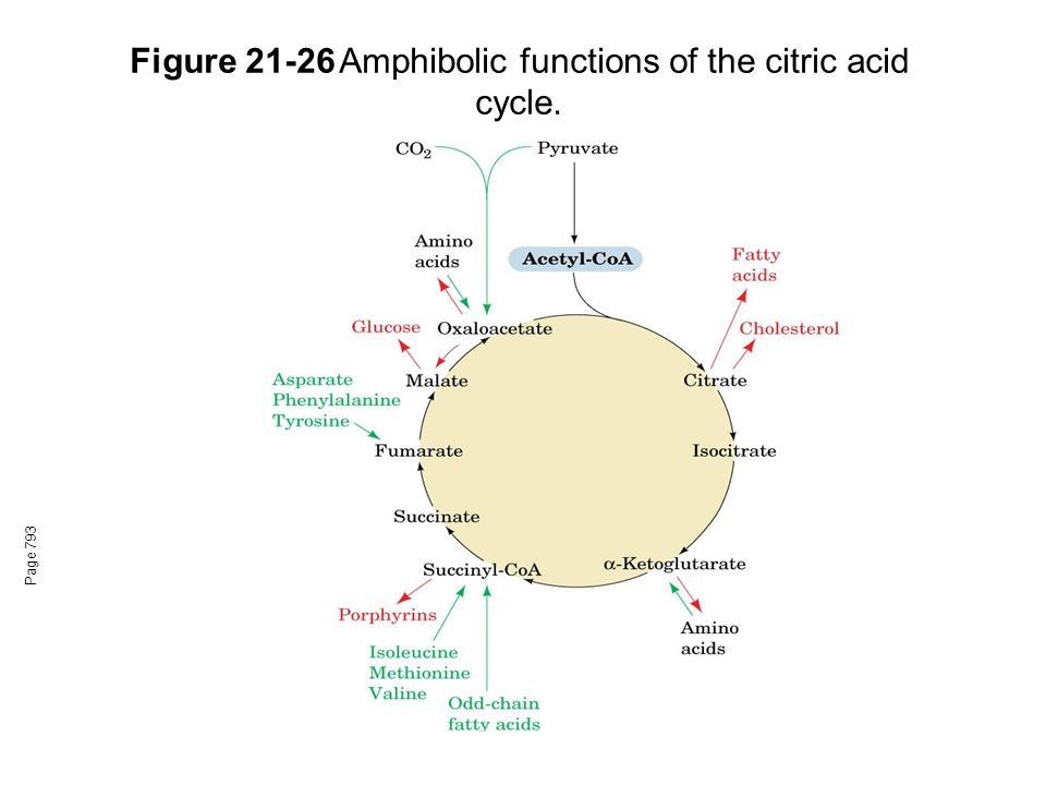 Figure 21-26Amphibolic functions of the citric acid cycle. Page 793
