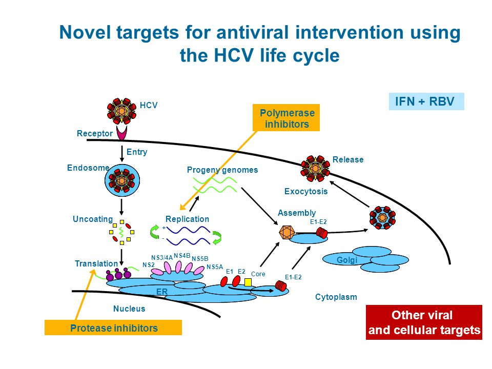 Novel targets for antiviral intervention using the HCV life cycle IFN + RBV Other viral and cellular targets Racanelli V, et a., Trends Immunol 2003;2