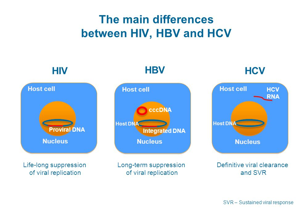The main differences between HIV, HBV and HCV H H HBV Host cell cccDNA Host DNA Integrated DNA Nucleus H H HIV Host cell Proviral DNA Nucleus H H HCV Host cell Host DNA Nucleus HCV RNA Life-long suppression of viral replication Definitive viral clearance and SVR Long-term suppression of viral replication Kieffer TL, et al.