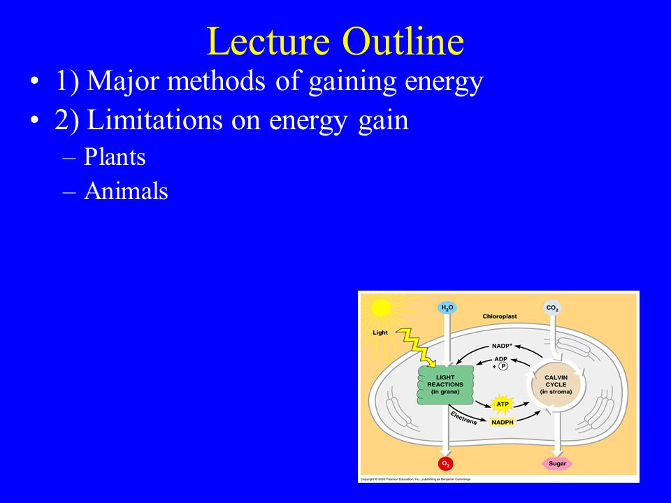 Allocation to leaves, stems & roots Principle of Allocation: Energy allocated to obtain resource in shortest supply –Do plants allocate to resource in shortest supply.