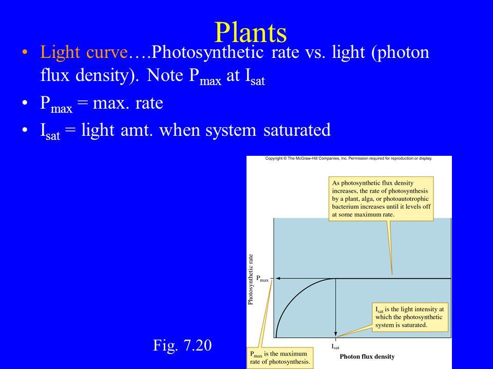 Plants Adiantum: fern in deep shade –Sciophyte: shade-adapted plant Encelia: desert –Heliophyte: sun-adapted plant Ps Lite