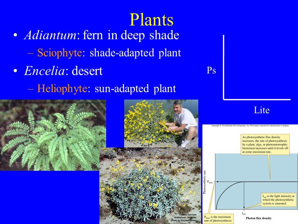 Optimal Foraging By Plants Ex, N in soil Fig. 7.26