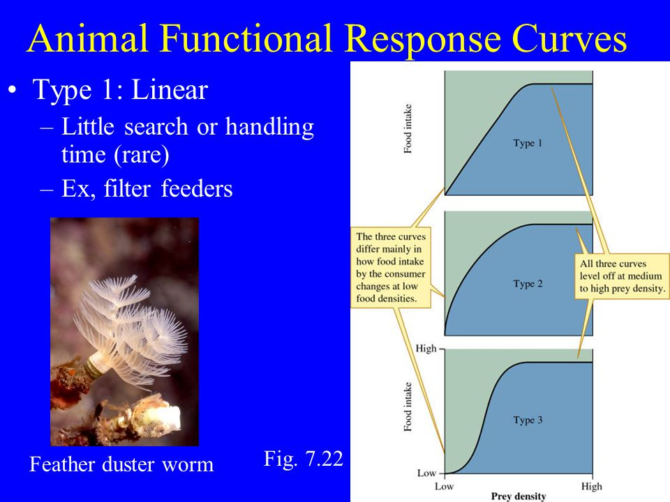 Animal Functional Response Curves Type 2: Rate increases faster than density –Partially limited by search/handling time –Common.