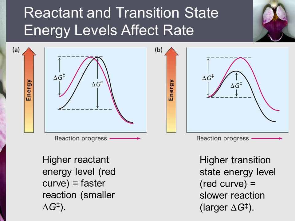 Higher reactant energy level (red curve) = faster reaction (smaller  G ‡ ). Higher transition state energy level (red curve) = slower reaction (large