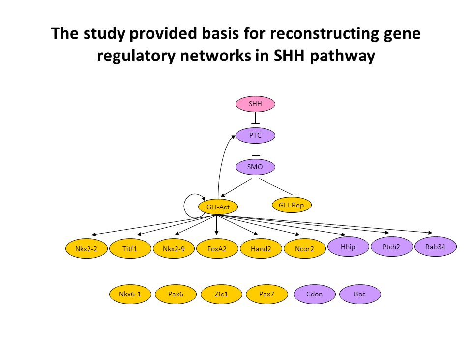 The study provided basis for reconstructing gene regulatory networks in SHH pathway SMO SHH PTC GLI-Act GLI-Rep Nkx2-2Titf1FoxA2Nkx2-9 Ptch2HhipRab34 Hand2Ncor2 Nkx6-1CdonPax6Zic1Pax7Boc