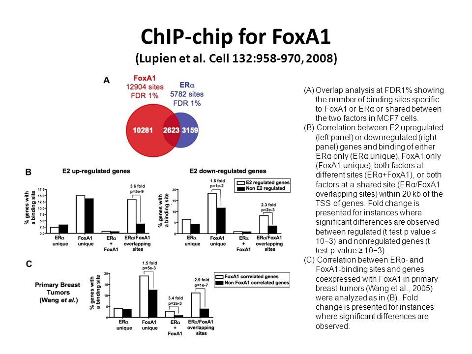 ChIP-chip for FoxA1 (Lupien et al. Cell 132:958-970, 2008) (A)Overlap analysis at FDR1% showing the number of binding sites specific to FoxA1 or ERα o