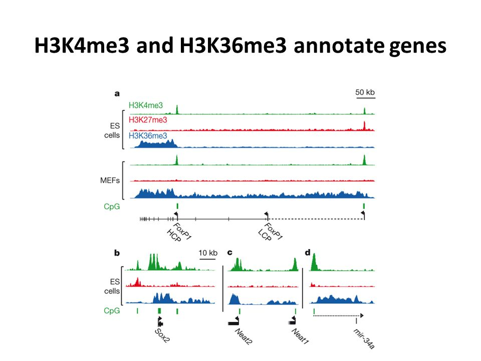 H3K4me3 and H3K36me3 annotate genes