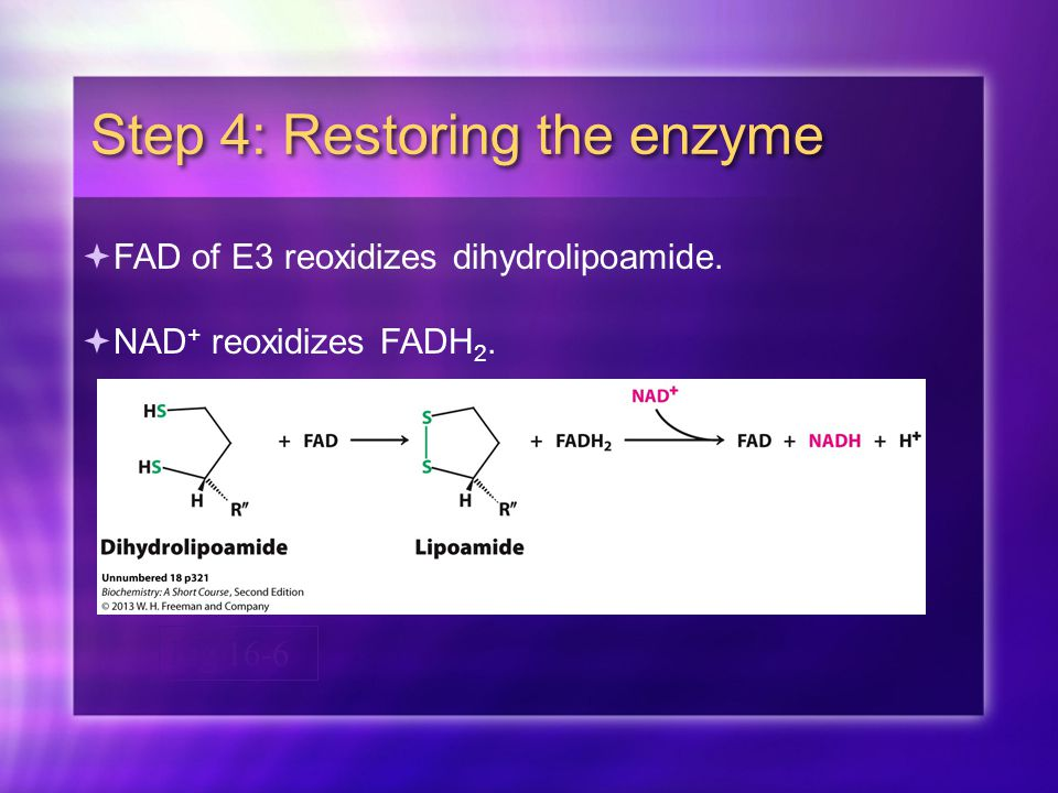 Fig 16-6 Step 4: Restoring the enzyme  FAD of E3 reoxidizes dihydrolipoamide.