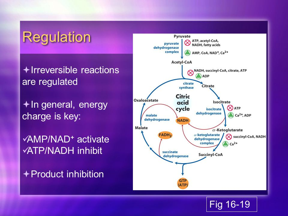 Regulation  Irreversible reactions are regulated  In general, energy charge is key: AMP/NAD + activate ATP/NADH inhibit  Product inhibition Fig 16-19