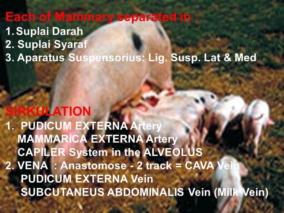 Each of Mammary separated in : 1.Suplai Darah 2. Suplai Syaraf 3.