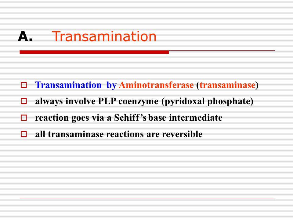 A. Transamination  Transamination by Aminotransferase (transaminase)  always involve PLP coenzyme (pyridoxal phosphate)  reaction goes via a Schiff