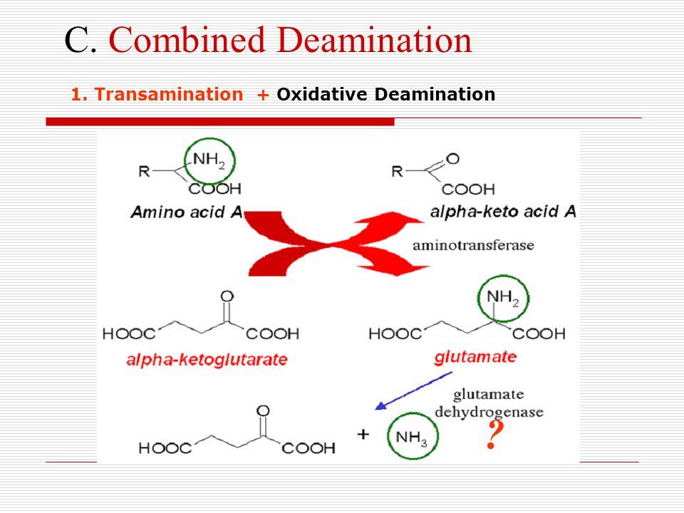 C. Combined Deamination ? 1. Transamination + Oxidative Deamination