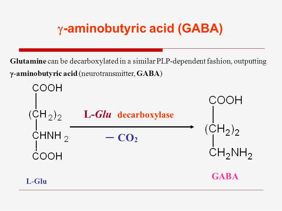L-Glu decarboxylase – CO 2 GABA L-Glu  -aminobutyric acid (GABA) Glutamine can be decarboxylated in a similar PLP-dependent fashion, outputting  -aminobutyric acid (neurotransmitter, GABA)