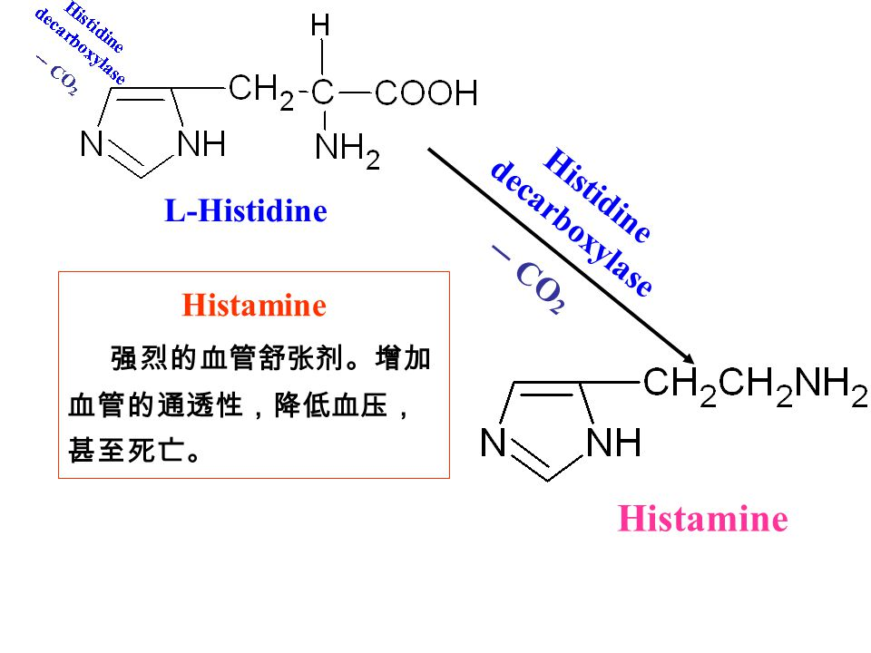 – CO 2 Histidine decarboxylase Histamine L-Histidine Histamine 强烈的血管舒张剂。增加 血管的通透性,降低血压, 甚至死亡。