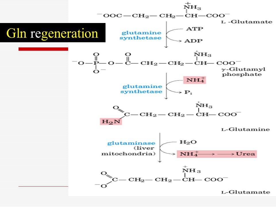 Gln regeneration