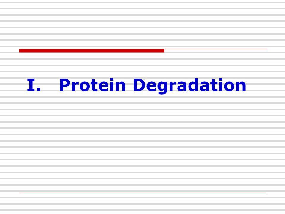 I. Protein Degradation