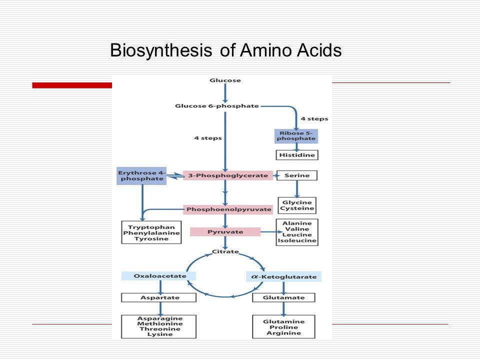 Biosynthesis of Amino Acids