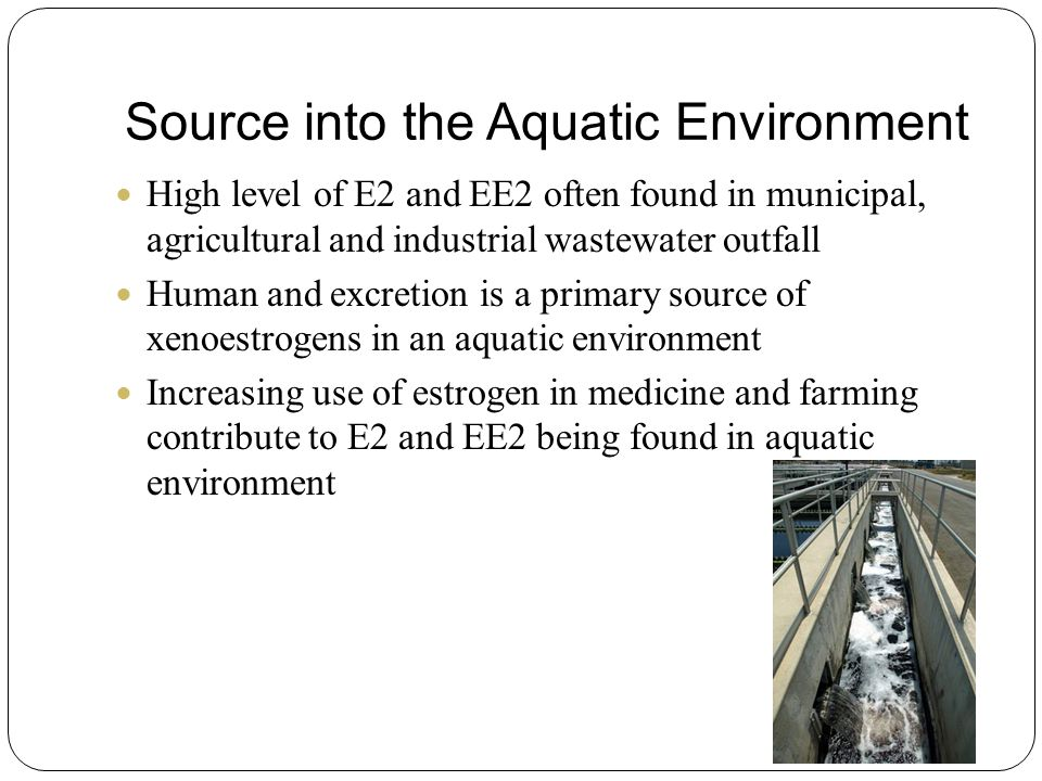 Source into the Aquatic Environment High level of E2 and EE2 often found in municipal, agricultural and industrial wastewater outfall Human and excretion is a primary source of xenoestrogens in an aquatic environment Increasing use of estrogen in medicine and farming contribute to E2 and EE2 being found in aquatic environment