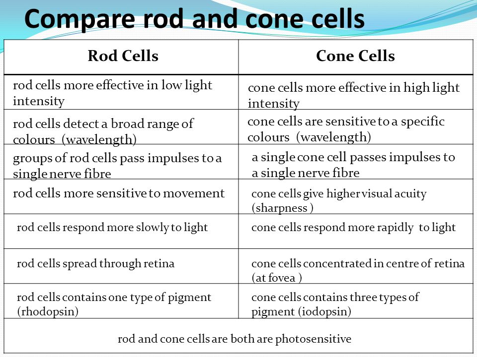 Compare rod and cone cells rod cells more effective in low light intensity cone cells are sensitive to a specific colours (wavelength) cone cells more