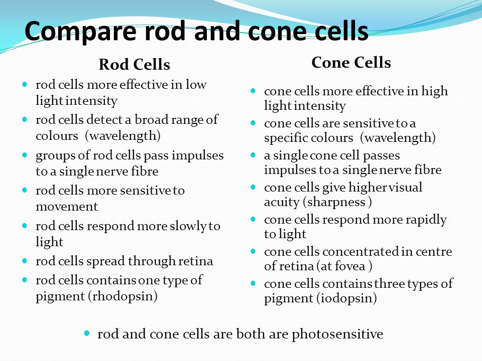 Compare rod and cone cells Rod Cells Cone Cells cone cells more effective in high light intensity cone cells are sensitive to a specific colours (wave