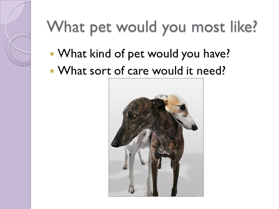 What pet would you most like? What kind of pet would you have? What sort of care would it need?