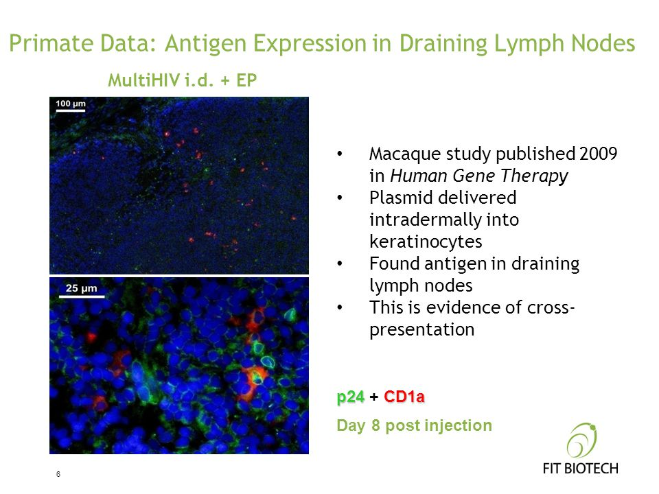 Primate Data: Antigen Expression in Draining Lymph Nodes MultiHIV i.d. + EP p24CD1a p24 + CD1a Day 8 post injection Macaque study published 2009 in Hu