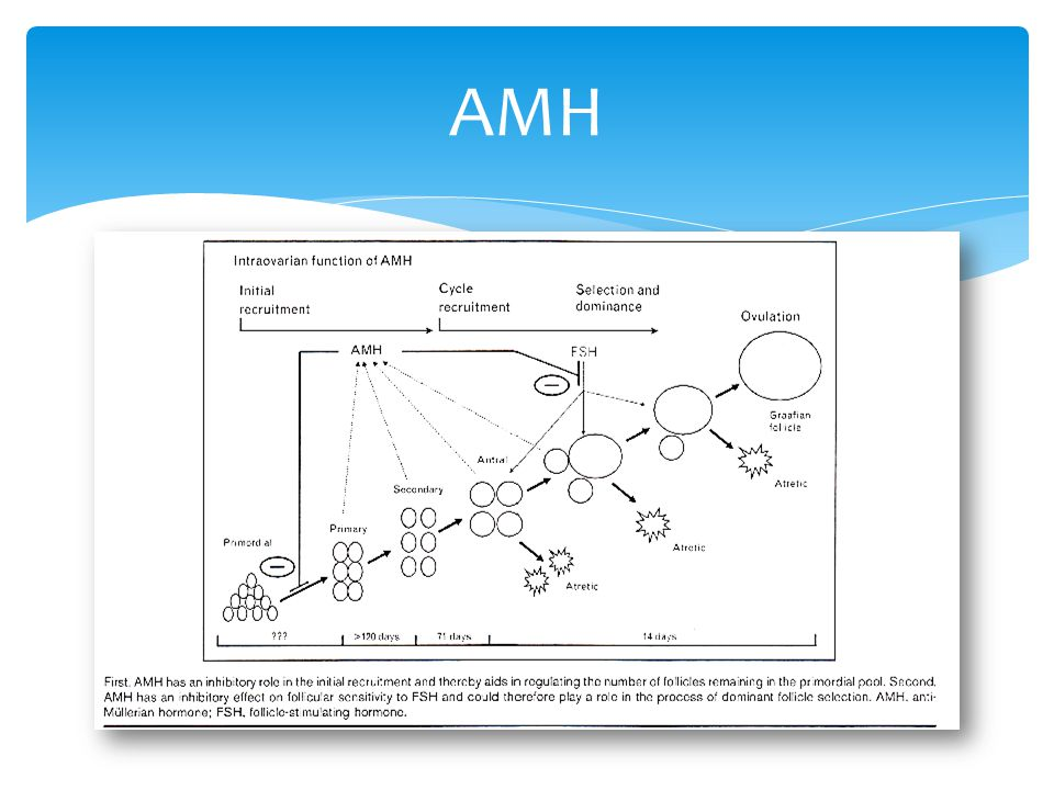  Can measure AMH throughout cycle  Stable between cycles  No observer bias