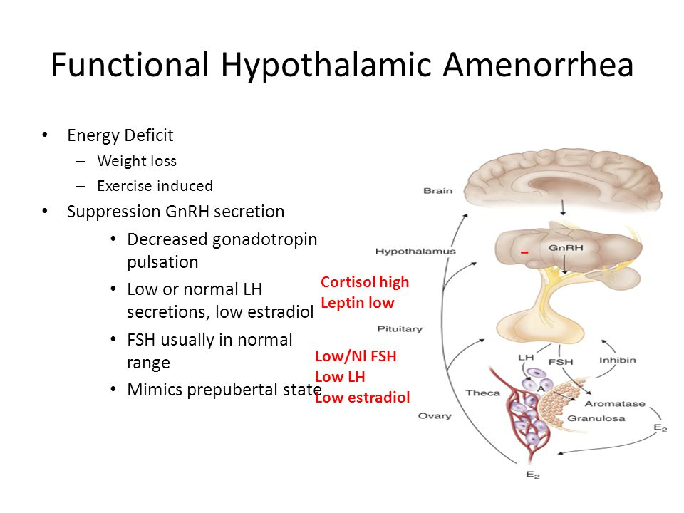 Functional Hypothalamic Amenorrhea Energy Deficit – Weight loss – Exercise induced Suppression GnRH secretion Decreased gonadotropin pulsation Low or