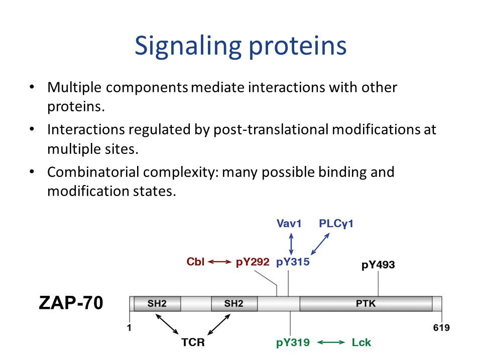 Signaling proteins Multiple components mediate interactions with other proteins.