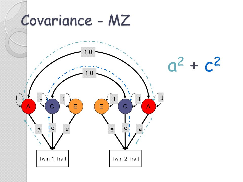 Covariance - MZ Twin 1 Trait ACE c e a Twin 2 Trait ECA c a e 1.0 11 1 1 11 a2 + c2a2 + c2