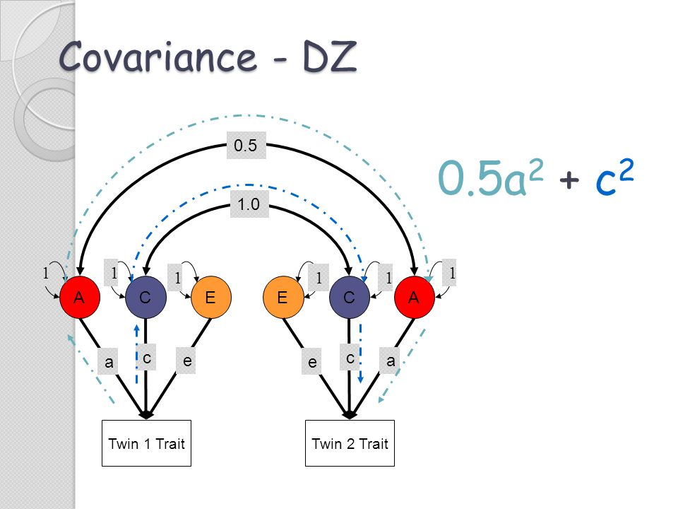 Covariance - DZ Twin 1 Trait ACE c e a Twin 2 Trait ECA c a e 0.5 11 1 1 11 1.0 0.5a 2 + c 2