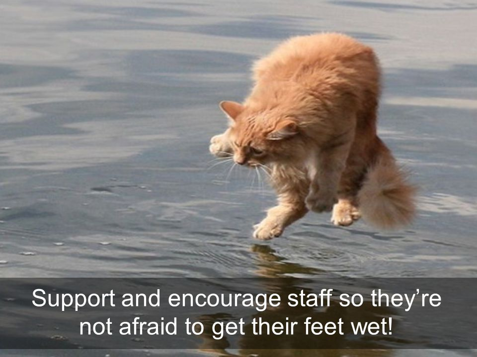 Support and encourage staff so they're not afraid to get their feet wet!