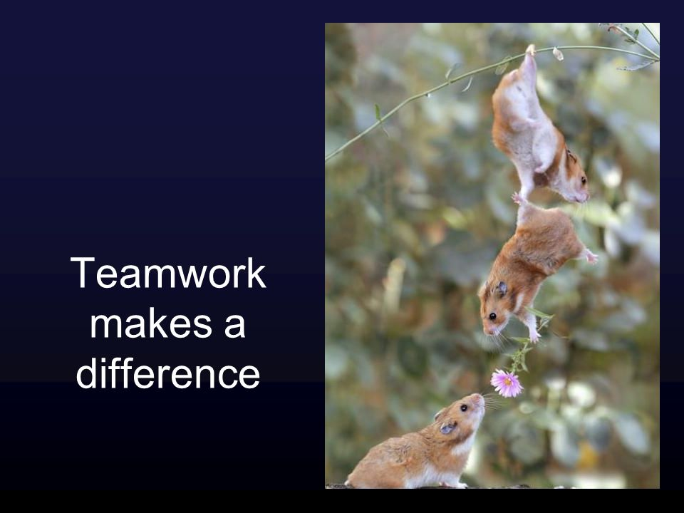 Teamwork makes a difference