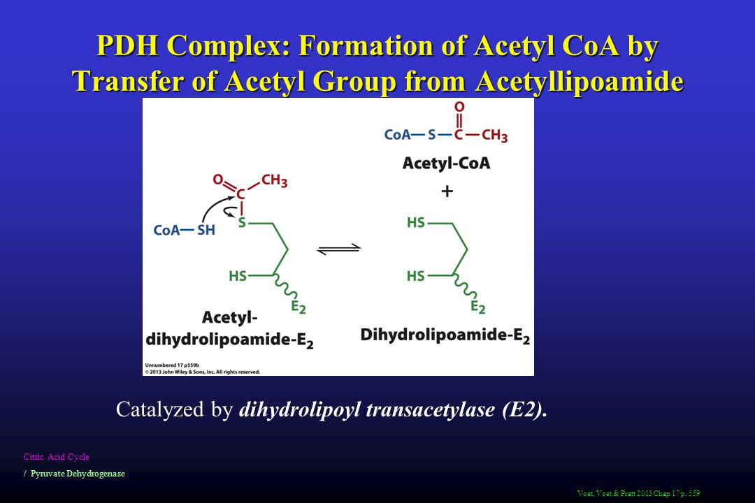 PDH Complex: Formation of Acetyl CoA by Transfer of Acetyl Group from Acetyllipoamide Citric Acid Cycle / Pyruvate Dehydrogenase Catalyzed by dihydrolipoyl transacetylase (E2).