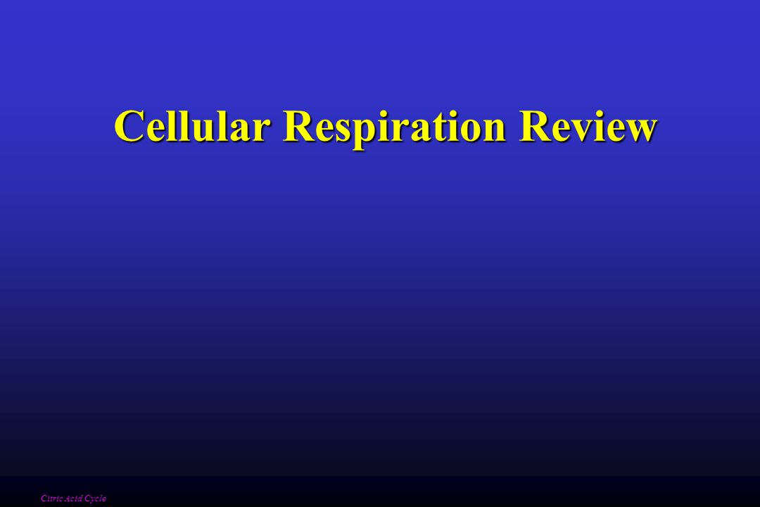 Cellular Respiration Review Citric Acid Cycle