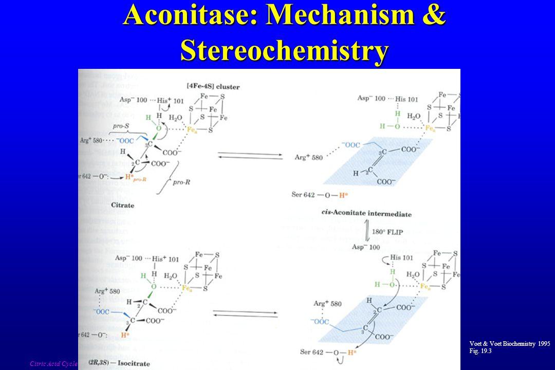 Aconitase: Mechanism & Stereochemistry Voet & Voet Biochemistry 1995 Fig. 19.3 Citric Acid Cycle