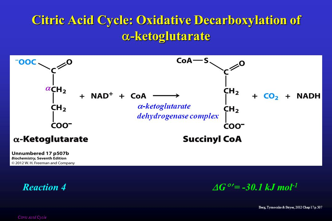 Berg, Tymoczko & Stryer, 2012 Chap 17 p.507 Citric Acid Cycle: Oxidative Decarboxylation of  -ketoglutarate Citric Acid Cycle  -ketoglutarate dehydrogenase complex  G  = -30.1 kJ mol -1 Reaction 4 