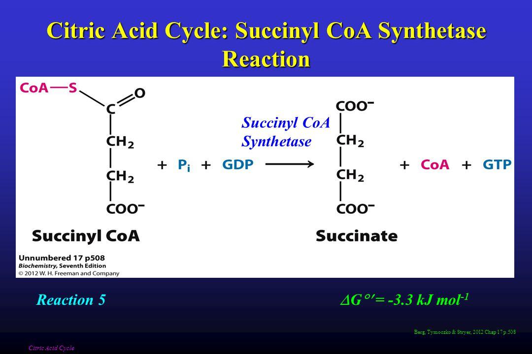 Berg, Tymoczko & Stryer, 2012 Chap 17 p.508 Citric Acid Cycle: Succinyl CoA Synthetase Reaction Citric Acid Cycle Succinyl CoA Synthetase  G  = -3.3 kJ mol -1 Reaction 5