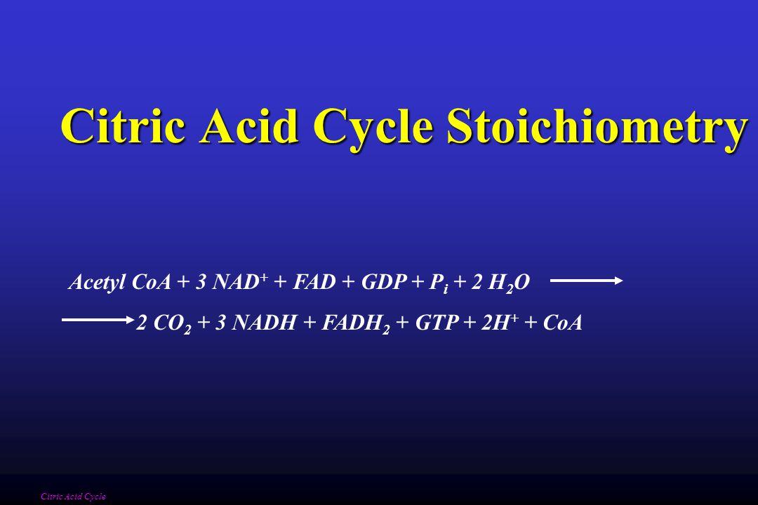 Citric Acid Cycle Stoichiometry Citric Acid Cycle Acetyl CoA + 3 NAD + + FAD + GDP + P i + 2 H 2 O 2 CO 2 + 3 NADH + FADH 2 + GTP + 2H + + CoA