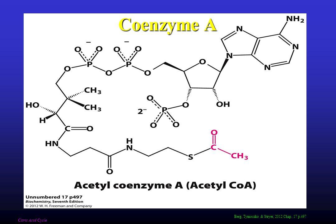 Berg, Tymoczko & Stryer, 2012 Chap. 17 p.497 Coenzyme A Citric Acid Cycle