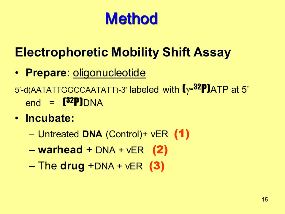 15 Prepare: oligonucleotide 5'-d(AATATTGGCCAATATT)-3' labeled with (  - 32 P) ATP at 5' end = ( 32 P) DNA Incubate: –Untreated DNA (Control)+ vER (1) –warhead + DNA + vER (2) –The drug + DNA + vER (3) Method Electrophoretic Mobility Shift Assay
